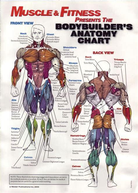 Human Anatomy. Anatomy Muscle Chart Diagram Tables ...