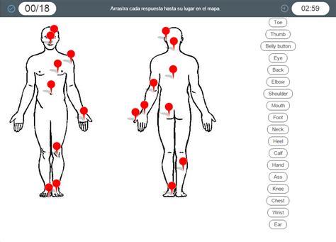 Human Body parts. Partes del cuerpo humano en inglés ...