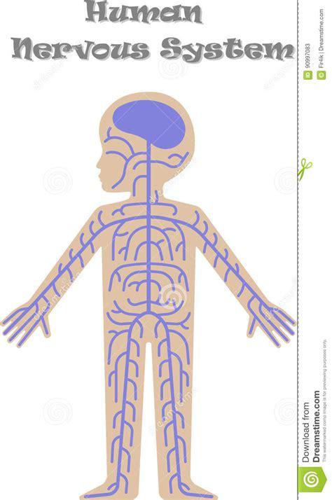 Human Nervous System For Kids 21 Best Nervous System ...