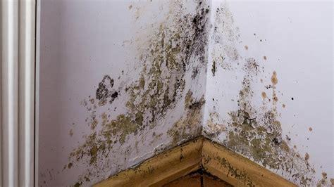 Humedad en las paredes y el techo: causas y solución