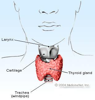 Hyperthyroidism & Hypothyroidism Symptoms, Treatment & Diet