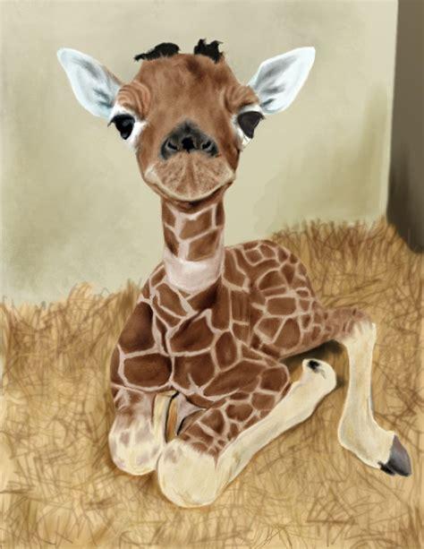 I Am a Baby Giraffe   what is happening here   Giraffes ...
