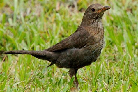 ID help please | BIRDS in BACKYARDS