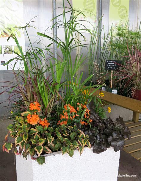Ideas y composiciones de plantas para maceta en septiembre ...