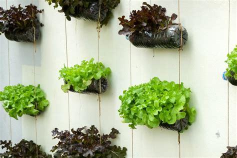 Ideias baratas para montar jardim vertical e horta ...