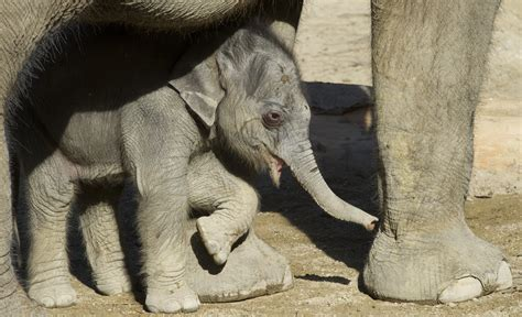 Il lutto tra gli elefanti, quando il dolore unisce anche ...