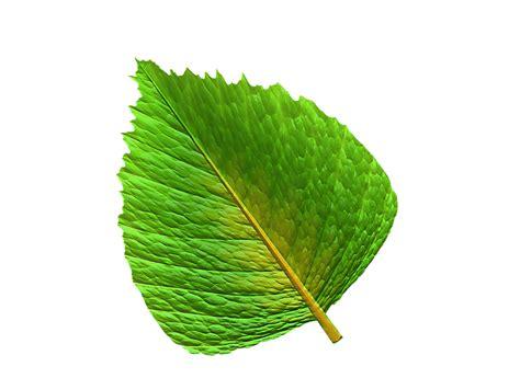 Illustration gratuite: Feuille, Vert, Feuille Verte ...