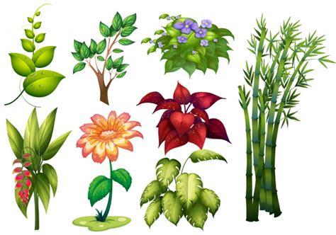 Ilustração de diferentes tipos de plantas e flores ...