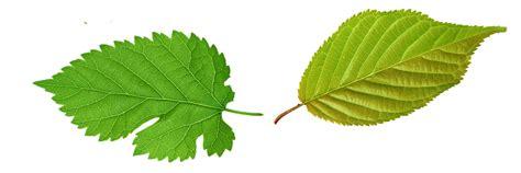 Ilustración gratis: Hoja, Verdes, Hojas, Planta, Verde ...