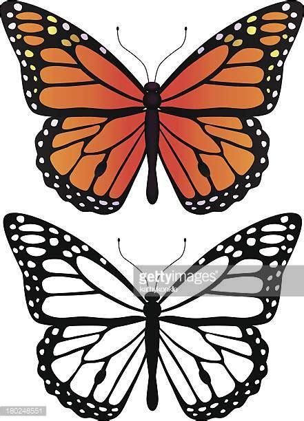 Ilustraciones de Stock y dibujos de Mariposa Monarca ...
