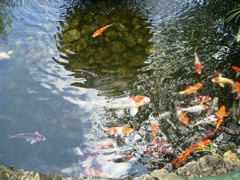 Image Gallery el estanque