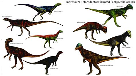 Image Gallery herbivore dinosaurs