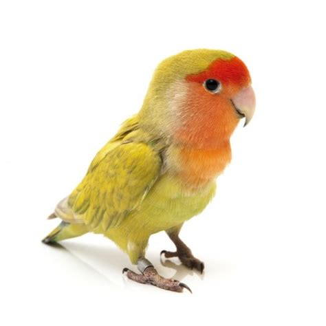 Image Gallery Las Aves