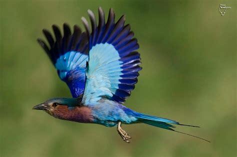 Image Gallery lilac birds