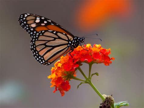 Image Gallery mariposa