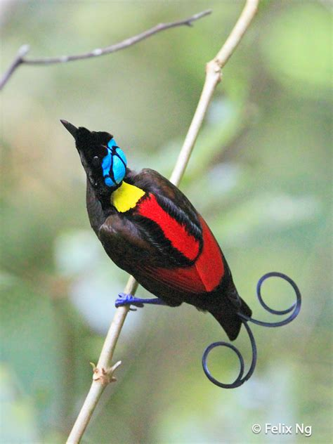 Image Gallery names of exotic birds