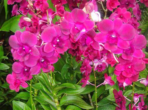 Image Gallery ornamental plants