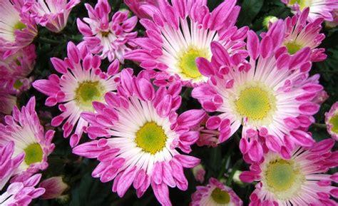 Image Gallery plantas ornamentales