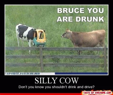 Image Gallery silly cow