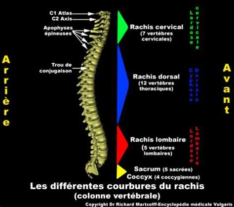 Image, Photo Rachis  différentes courbures , Anatomie ...