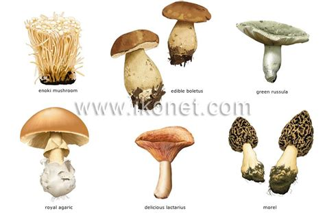 Image result for mushroom names list and pictures | veg ...