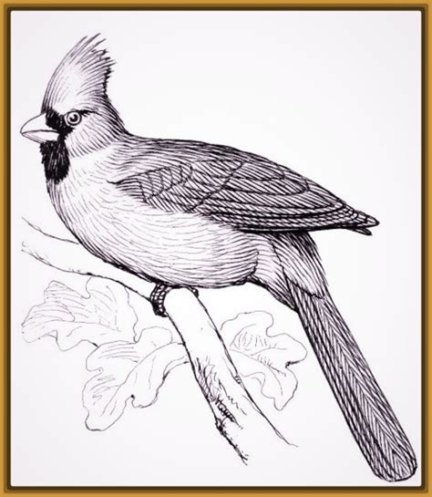 imagen de aves para dibujar a lapiz Archivos   Imagenes de ...