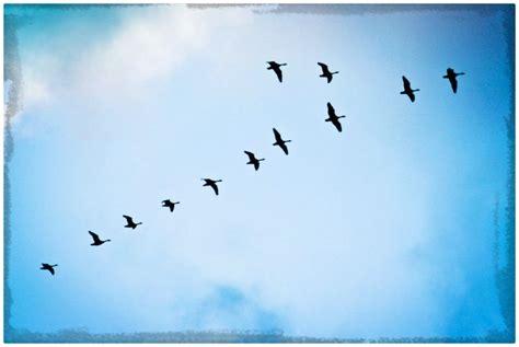 imagen de aves volando en apensar Archivos   Imagenes de ...