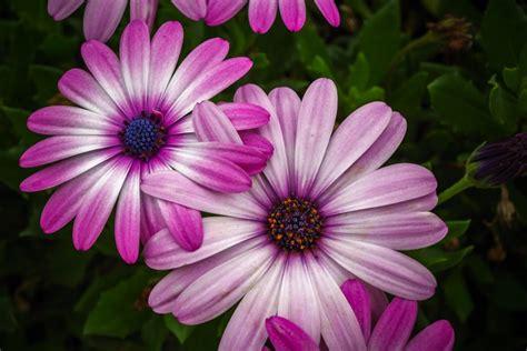 Imagen de Flores hermosas para fondo de pantalla - Foto ...