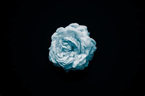 Imagen de Fondo de pantalla flor celeste - Foto Gratis