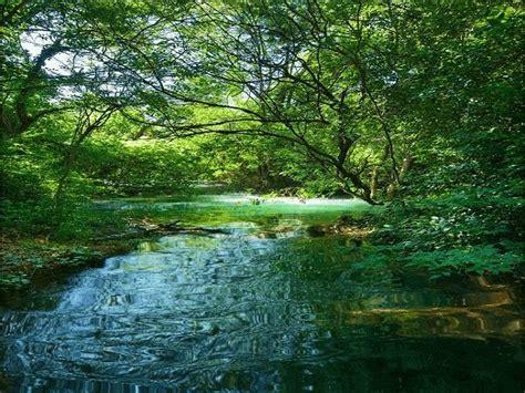 imagen de gif en movimiento de paisajes con arboles ...