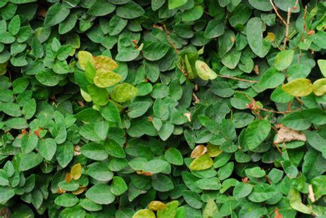 Imagen de hoja,hojas,verde,planta,plantas,vista de frente ...
