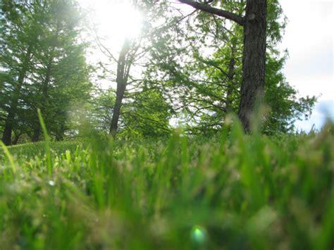 Imagen de prod06,aire libre,dia,exterior,verde,bosque ...