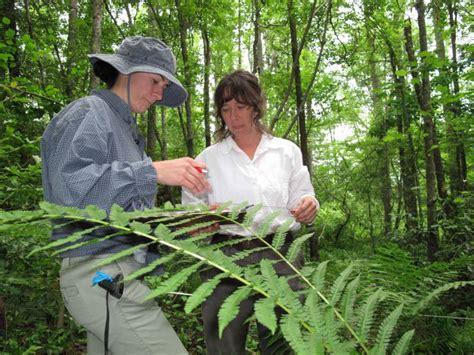 Imagen gratis: biólogos, bosque