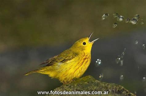 imagen pajarito fotos pajaros fotografias aves Quotes