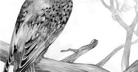 Imágenes Arte Pinturas: Dibujos con lápiz pájaros ...