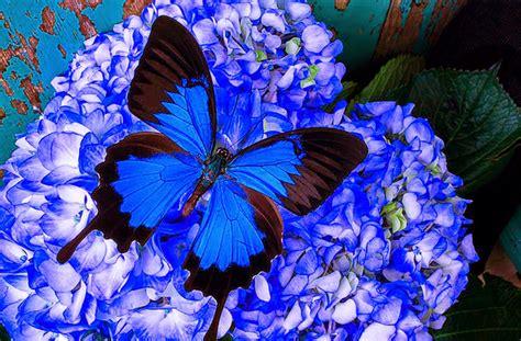 imagenes bellas de mariposas | Imagenes De Mariposas