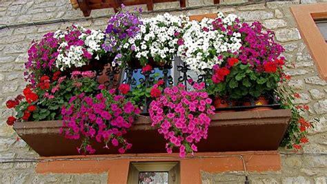 Imagenes bonitas con flores y plantas | Página 7