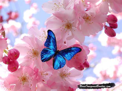 Imágenes Bonitas: Mariposa Azul y Flores Rosas   imágenes ...