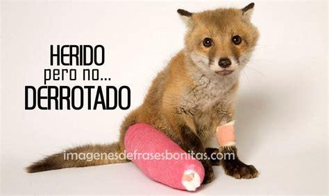 Imagenes Bonotas De Animalitos Tiernos | Imagenes De ...