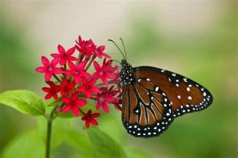 Imagenes | Butterfly Only-Jayda