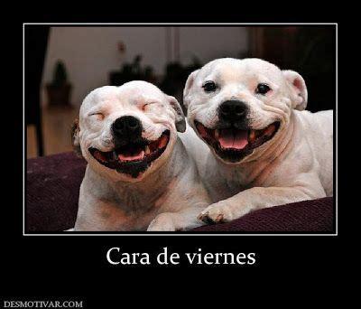 Imagenes chistosas de feliz viernes ~ Fotos e imagenes ...