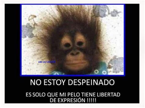 imagenes chistosos con dedicatorias de monos fotos ...