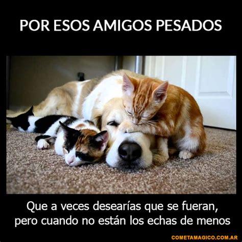Imagenes Con Frases X El Dia Amigo   137 frases de amistad ...