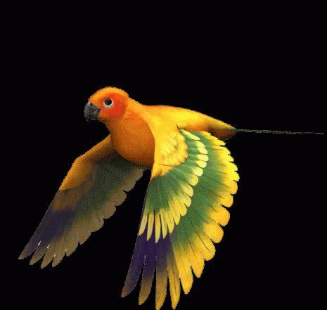 Imágenes con Gifs de pájaros (Pájaros volando) para ...