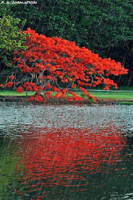 Imagenes Con Movimiento De Paisajes Naturales Con Agua