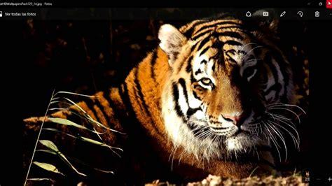 Imágenes de animales en HD. para fondo de pantalla. - YouTube