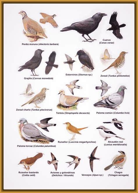 imagenes de aves de venezuela con sus nombres Archivos ...