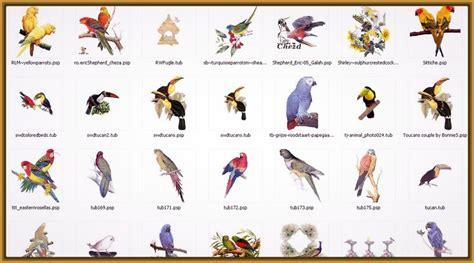 imagenes de aves exoticas con sus nombres Archivos ...