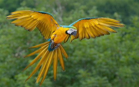 Imágenes de Aves Exóticas en HD | Fotos e Imágenes en ...