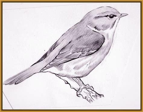 imagenes de aves para dibujar Archivos   Imagenes de Pajaros